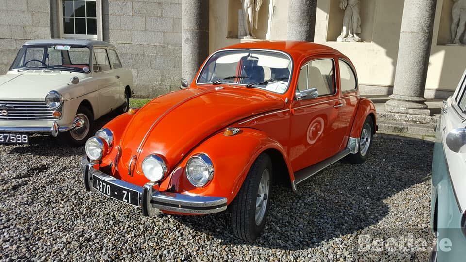 4970 ZI | Beetle.ie